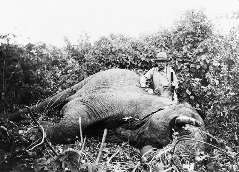 Theodore Roosevelt i Afrika.